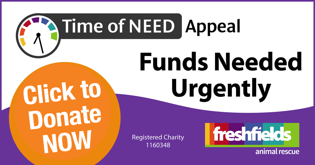 Freshfields Time Of Need Appeal - click this banner to donate